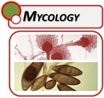 Microscopes For Mycology